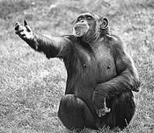 chimpreaching