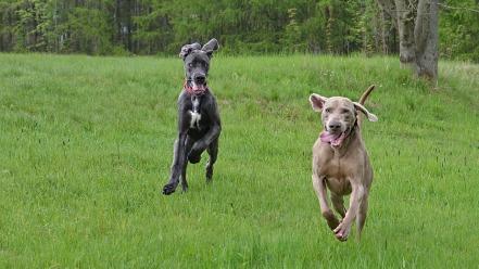 running-dogs-2298436_1280